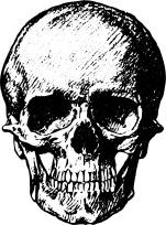 human-skull-1443448437d1n