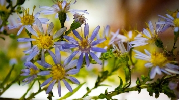 aster-glass_-flowers-exhibit-16